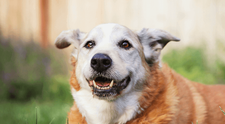 Senior Pets & Lifetime Wellness