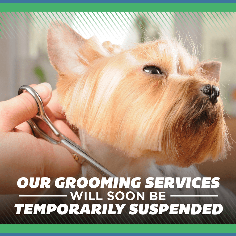 Our Grooming Services Will Soon Be Temporarily Suspended